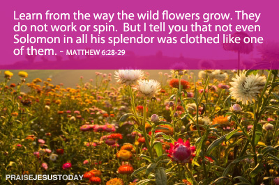 Learn from the way the wild flowers grow.